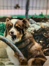 palm-distributing-dogs-love-pet-treats